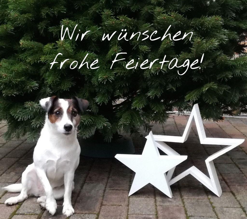 weihnachten_schnauze
